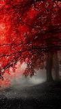 #Misty Autumn Forest- Pinterest