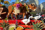USA Parks Cow Geese Roses Rose Parade Pasadena