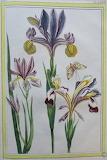 Botanique (6)