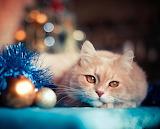 I wish lots of tuna fish for Christmas