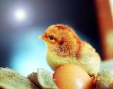Cute Chick :)