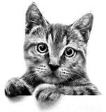 Gezeichnete Katze
