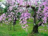 Paradise garden -nature