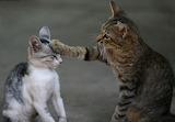 Cat-teasing