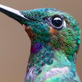 HummingbirdMacro_ChrisMorgan