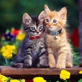 Cute Kittens...