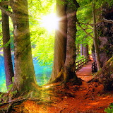 ☼ Sunny Forest...