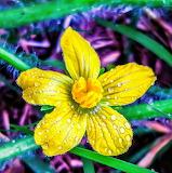 Flor amarilla56