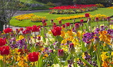 Flowers - Bailiwick of Guernsey