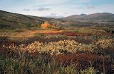 Autumn Tundra Yukon Canada