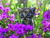 Tiny kitten among flowers