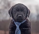 Puppy 1443