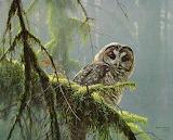 WM Owl 1