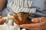 Squirrel orphan