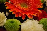 ^ Chrysanthemums for Fall