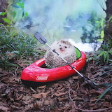 Azuki the hedgehog goes canoeing.