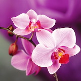 Exquisite Orchids...