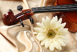 ☺ Violin and flower...
