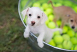 Puppy Ball Pit
