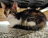 Under Couch Kiki