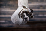 DOG IN A SWING -Dad-bods-rescue-dogs-2020-calenda
