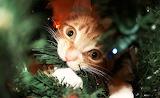 eating the christmas tree