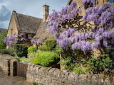 Wisteria, Broadway, Cotswolds