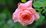 Flower garden plant (361)