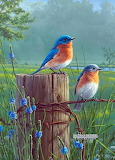 Bluebirds ~ Hautman Brothers