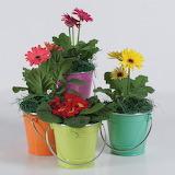 ^ Flower bucket