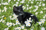 Kitty among flowers