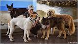 Dog Walker May 2014