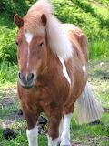 Hobune !!
