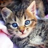 ☺Cute Baby Kitten...
