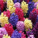☺ Colorful flowers...