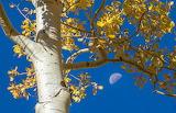 tree, moon and sky