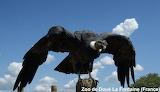 Flight of the condor / l'envol du condor