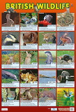 Poster-british-wildlife