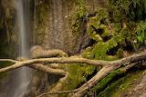 Texas rain forest Gorman Falls, TX