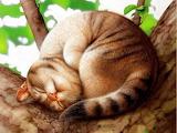 Cat by Makoto Muramatsu
