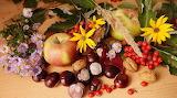 Frutta e fiori autunnale