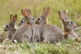 RabbitsGroup
