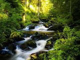 Selva humeda