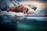 Dog sleeping water side