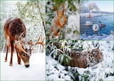 Animal world in winter