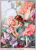 Sweet pea fairies - Cicely Mary Barker
