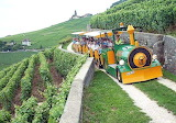 Train touristique vaudois dans les vignes- suisse