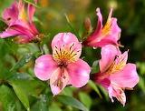 Flores 802