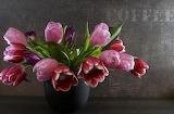 Tulipani variegati