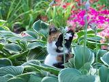Tortie in a garden